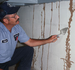 Termite Inspection in Newport Beach | Newport Beach termite Inspection | Termite and Pest Control in Newport Beach